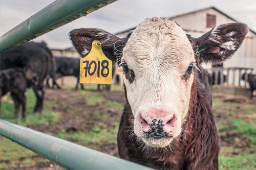 animal-countryside-agriculture-farm-534